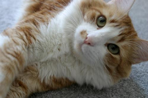 gato-close-delado.jpg