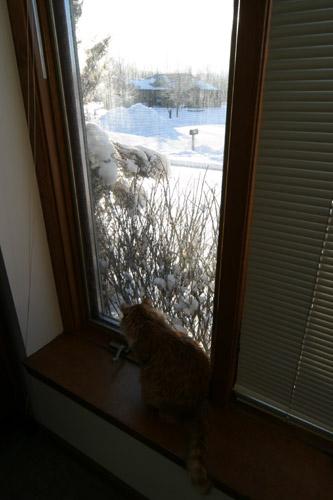 gato-janela-neve.jpg