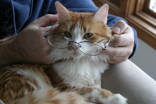 gato-oculos.jpg