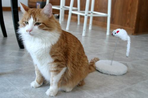 gato-rato.jpg