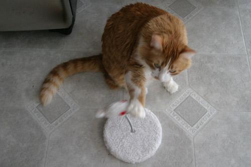 ratinho-brincando.jpg
